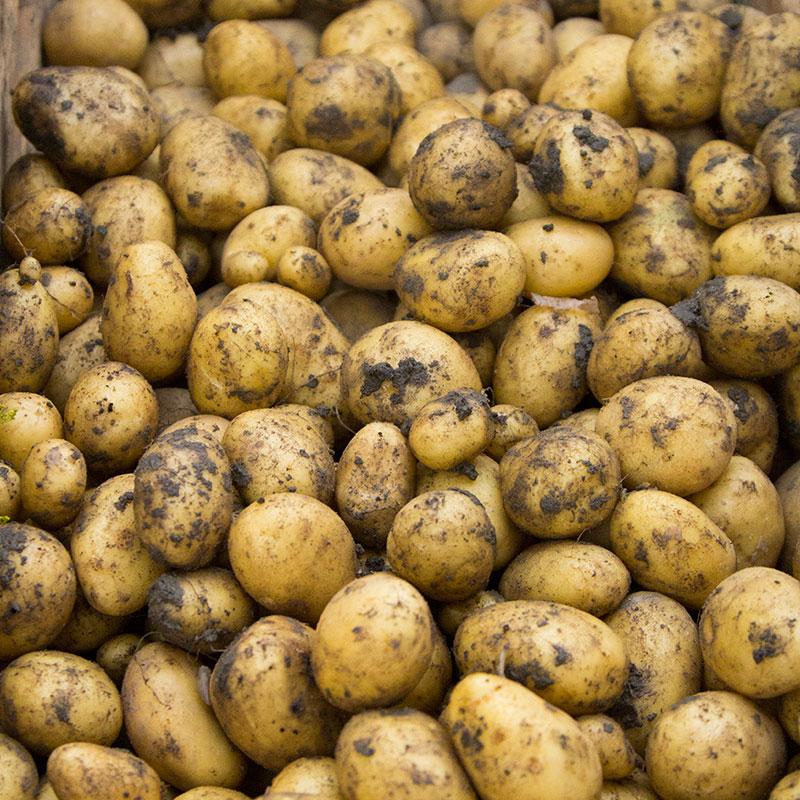 kartofler på tilbud
