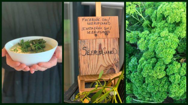Suppe lavet på grøntsager fra gården, links, persille